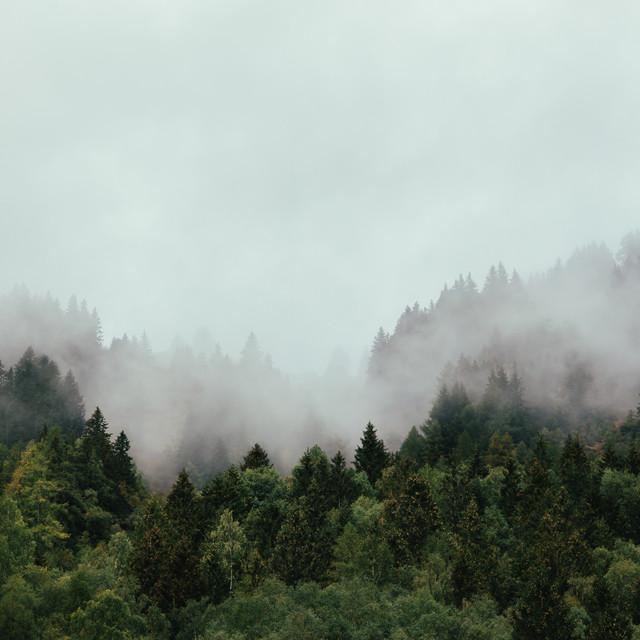 Thomas Jackson – Den inre skogen (Spotify)