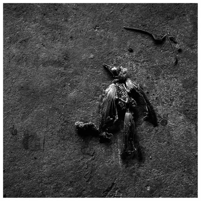 Hellbach – Allein in deinem Himmel (Spotify)