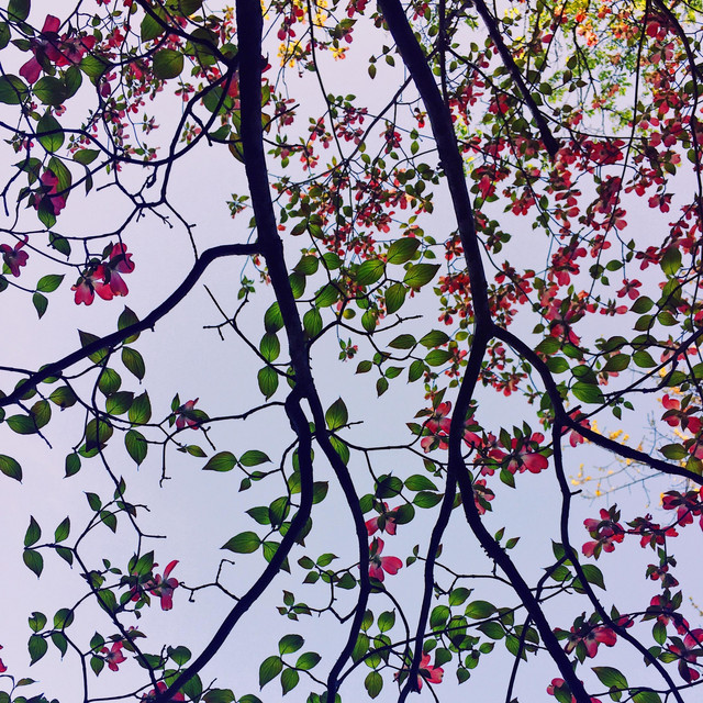 The Purple Kite – Branches – Instrumental (Spotify)