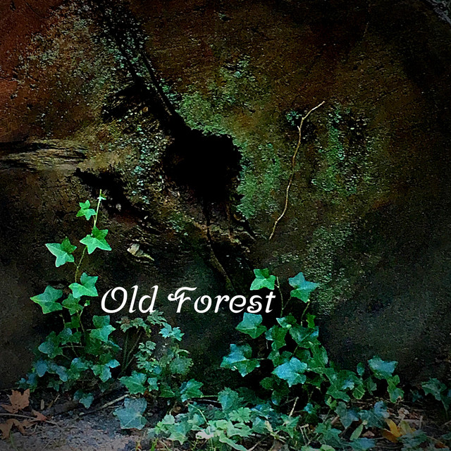 David King – Old Forest (Spotify)