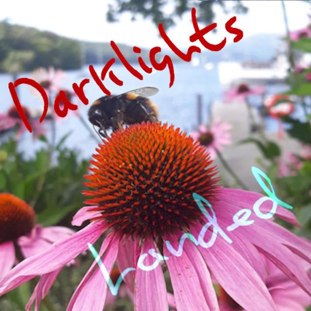 Darklights – Lotus Bird (Spotify)